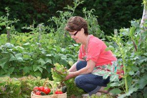 A teacher picking vegetables